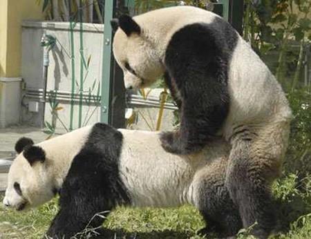 パンダ用AVの画像3