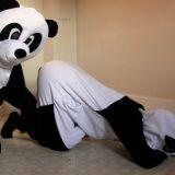 パンダもAV見るだと!?シャンシャンの誕生がよく分かるPornhubが作ったパンダ用エロ動画。